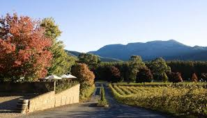 2012 - Jo Marsh moves to the Alpine Valleys and starts working with Feathertop Wines