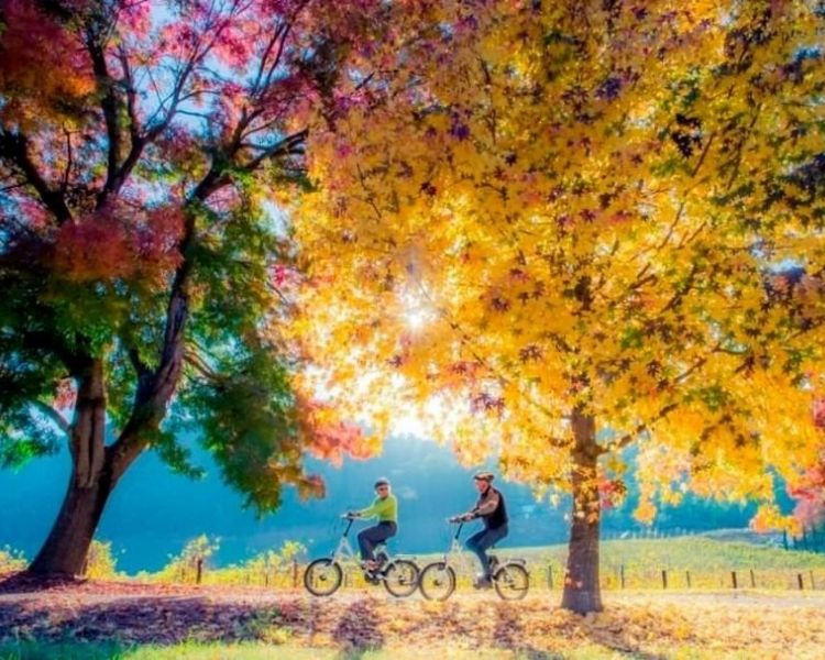 Bike Ride with Autumn Leaves